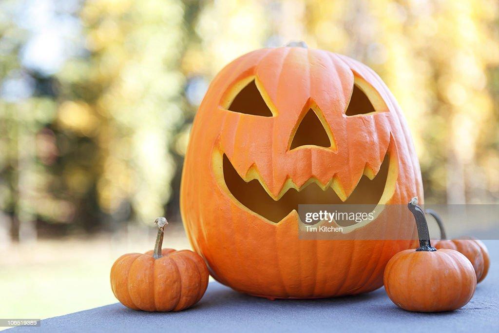 Jack-O-Lantern and three small pumpkins : Stock Photo
