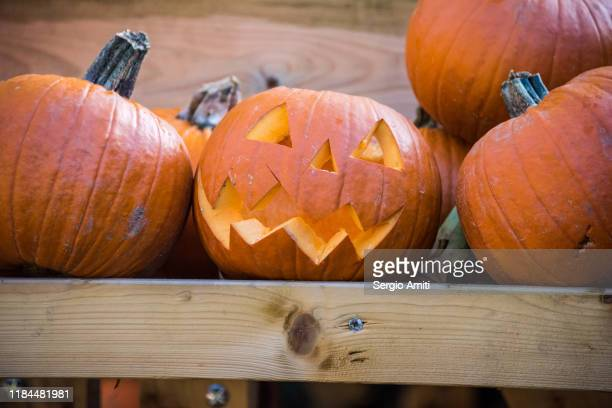 jack-o-lanterns carved pumpkins - highgate stock pictures, royalty-free photos & images