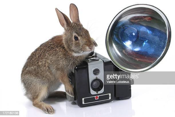 Jackrabbit and old camera