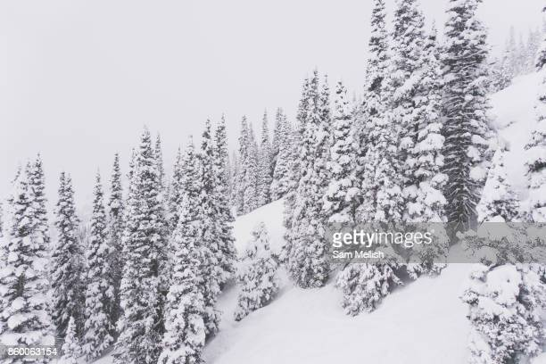 Jackson Hole in Wyoming United States of America