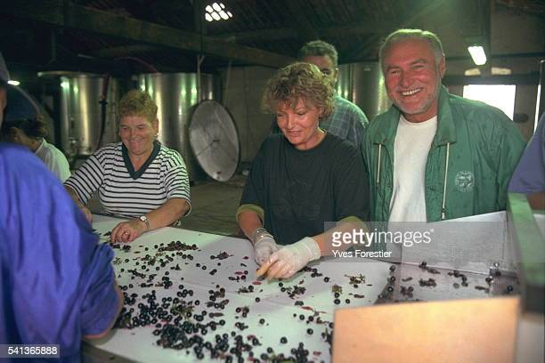 Jacques Ribourel has come to encourage the employees who are sorting the grapes by hand