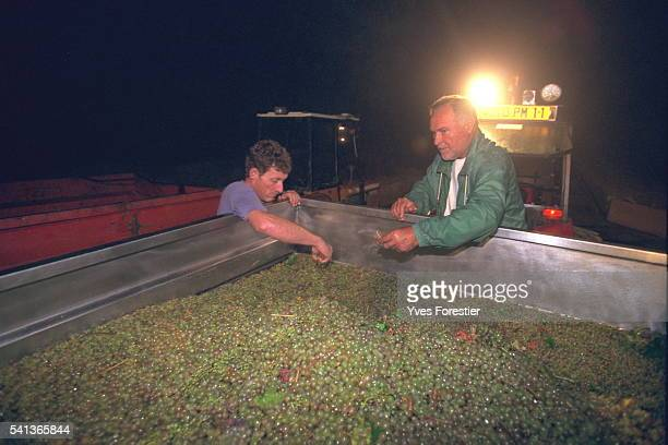 Jacques Ribourel keeps a close eye on things throughout the wine harvest