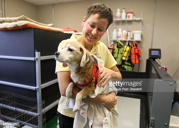 Jacquie Welkener Animal Rehabilitation Practitioner uses a towel to dry of Joan a 14year old Beagle after she used an underwater treadmill at Healing...