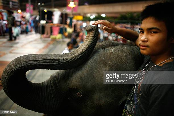 Jae a Thai mahout holds onto his 2 1/2yearold baby elephant in front of a mall September 25 2008 in Bangkok Thailand While the elephant is a symbol...