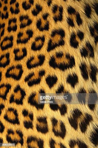jaguar fur - pele de leopardo - fotografias e filmes do acervo