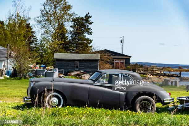 1955 jaguar - newfoundland and labrador stock pictures, royalty-free photos & images