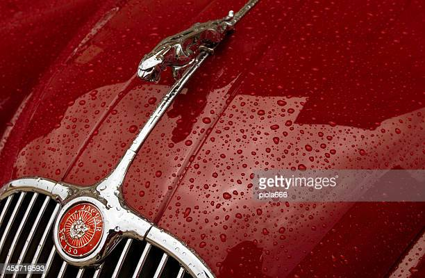 jaguar vintage classic car symbol close-up - jaguar stock photos and pictures