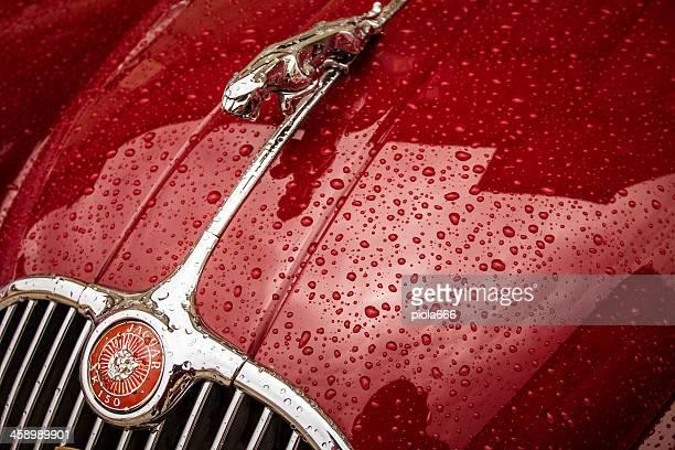 jaguar vintage di auto classiche di simbolo close-up - jaguar foto e immagini stock