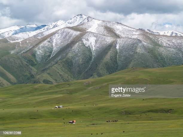 jailoo (highland pasture) in the tian shan mountains in kyrgyzstan - tien shan mountains stock pictures, royalty-free photos & images