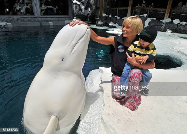 Jaime Pressly who plays Joy on the NBC sitcom 'My Name is Earl' and her 2yearold son Dezi visit with Ferdinand the beluga whale at SeaWorld San...