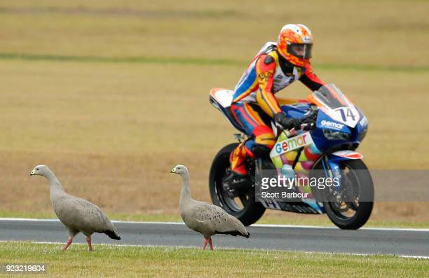 Jaimie van Sikkelerus of the Netherlands avoids two birds on the track as he competes in the SuperSport FIM World Championship Free Practice session...