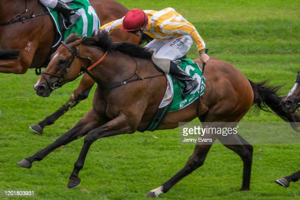 Jake Noonan on I Am Vinnie wins race 9 The Edney Ryan Group Handicap during Sydney Racing at Royal Randwick Racecourse on January 25 2020 in Sydney...