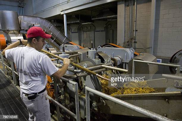 A 'Jalisco Colonial Distillery' employee checks blue Agave plants during the production of tequila in Arandas Mexico 11 January 2008 In the last 15...