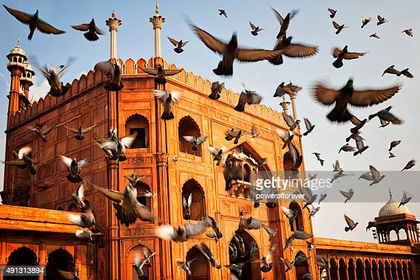 jama masjid - old delhi, india - jama masjid delhi stock pictures, royalty-free photos & images