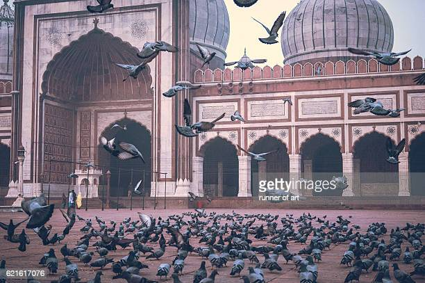 jama mosque - jama masjid delhi stock pictures, royalty-free photos & images