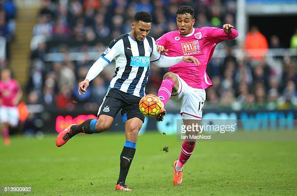 Jamaal Lascelles of Newcastle United vies with Joshua King of Bourenmouth during the Barclays Premier League match between Newcastle United and AFC...