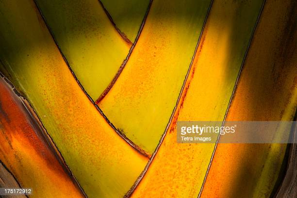 jamaica, close-up of palm tree - west indies stock pictures, royalty-free photos & images