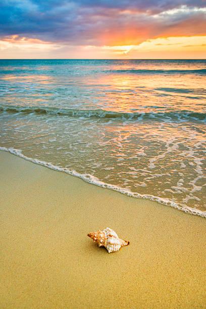 Jamaica, Shell on beach at sunset