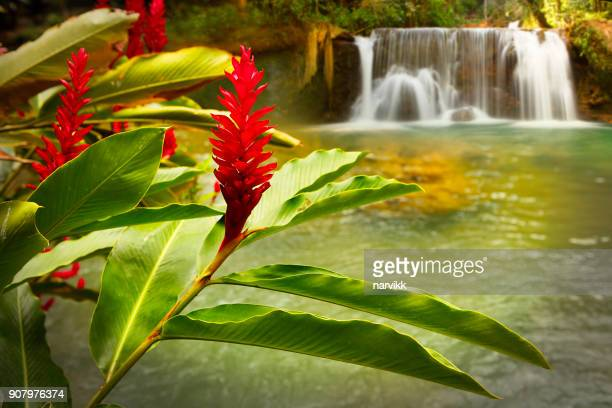 jamaica ys falls - jamaica stock pictures, royalty-free photos & images