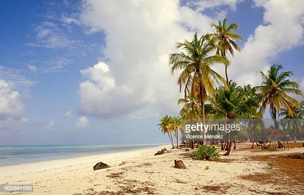 jambiani beach - vicente méndez fotografías e imágenes de stock