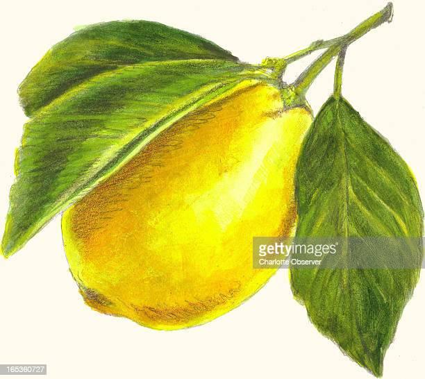 James Denk color illustration of a lemon