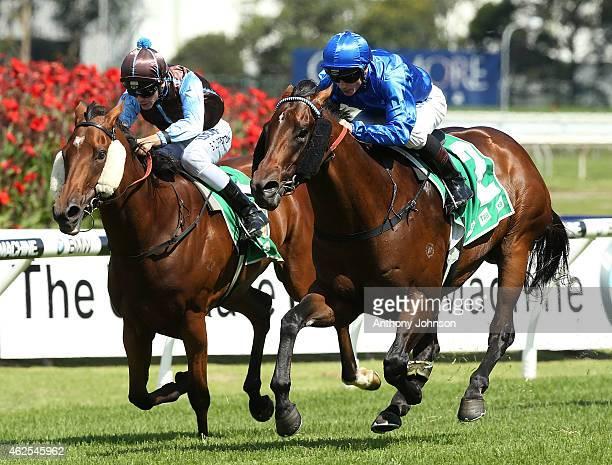James McDonald rides Sarajevo during Sydney Racing at Rosehill Gardens on January 31 2015 in Sydney Australia