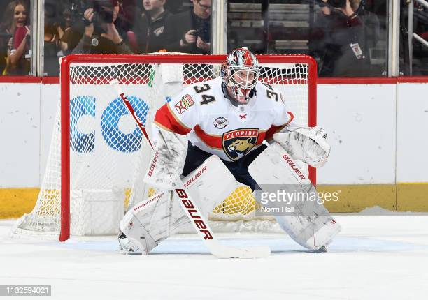 James Reimer of the Florida Panthers gets ready to make a save against the Arizona Coyotes at Gila River Arena on February 26 2019 in Glendale Arizona