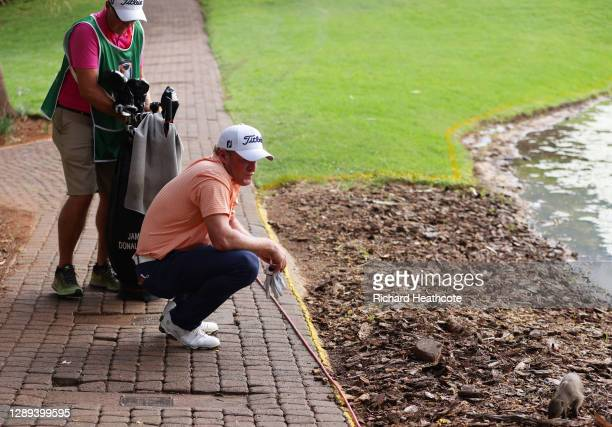 Jamie Donaldson of Wales looks at a Mongoose during Day 2 of the South African Open at Gary Player CC on December 04, 2020 in Sun City, South Africa.