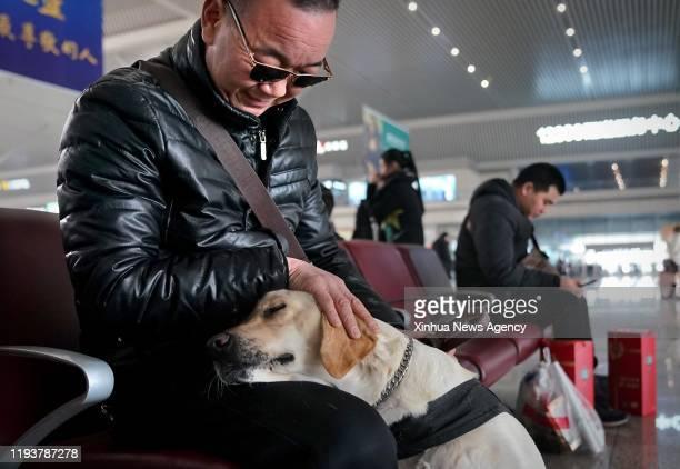 Jan. 14, 2020 -- Guide dog Xiaoqi companies its handler as they wait for a train at Zhengzhoudong Railway Station in Zhengzhou, central China's Henan...