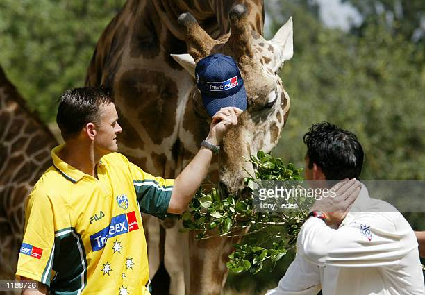 Adam Gilchrist and Jason Gillespie from the Australian cricket team feeding the giraffes at the zoo during the The launch of the Travelex sponsorship...
