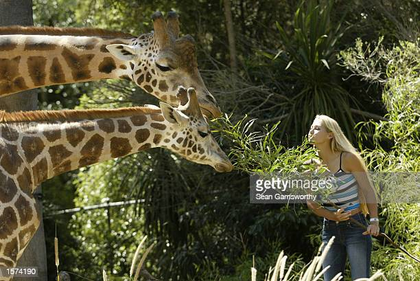 Anna Kournikova of Russia takes a break from Australian Open at the Melbourne Zoo Melbourne Australia DIGITAL IMAGE Mandatory Credit Sean...