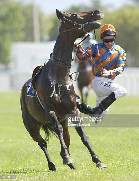 Jim Byrne falls off his mount Dutch Harry while on his way to the barrier for the start of the Magic Millions for three year olds at the Gold Coast...