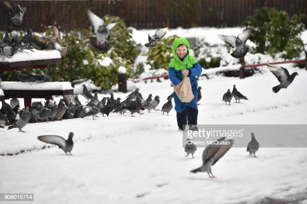 Jan Borza feeds pigeons in the snow on January 17 2018 in Belfast Northern Ireland The Met Office has placed an amber weather warning alert on the...