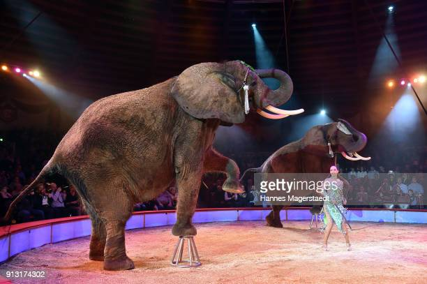 Jana LaceyKrone during Circus Krone celebrates premiere of 'Hommage' at Circus Krone on February 1 2018 in Munich Germany