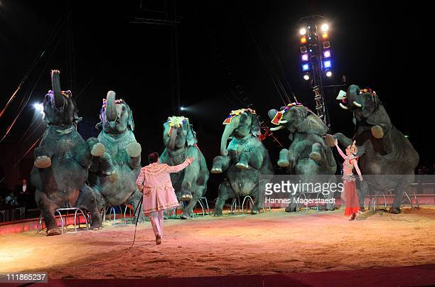 Jana Mandana and James Puydebois perform the elephants during the Circus Krone 'Celebration' Premiere on April 7 2011 in Munich Germany