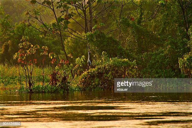Janauary Lake Ecological Park