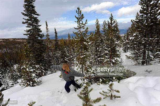 Jane Burgess drags her newly cut Christmas tree through the snow the Elk Creek area in the Arapaho and Roosevelt National forests between Fraser and...