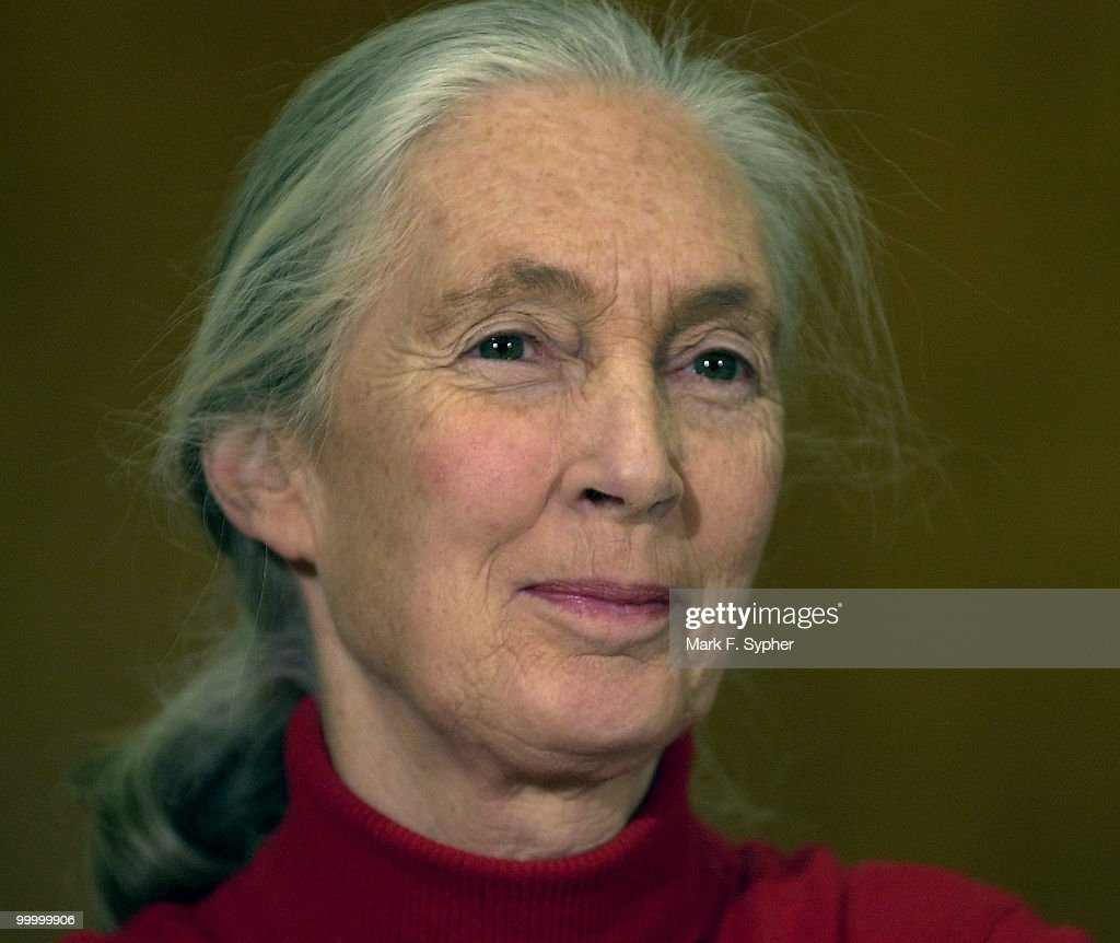 Jane Goodall, at the lecture on health and environmental issues, 'Bushmeat' and the Origin of