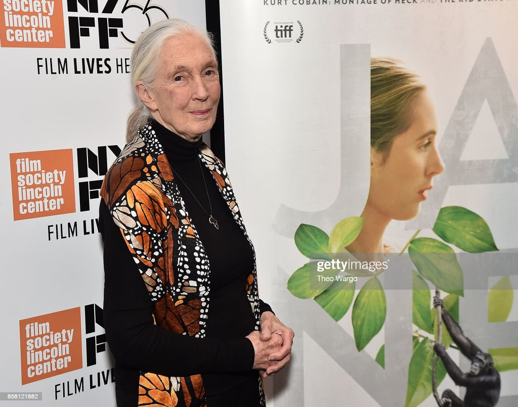 Jane Goodall attends the 55th New York Film Festival - 'Jane' at The Film Society of Lincoln Center, Walter Reade Theatre on October 5, 2017 in New York City.