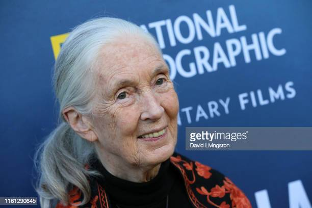 """Jane Goodall attends the National Geographic Documentary Films' premiere of """"Sea of Shadows"""" at NeueHouse Los Angeles on July 10, 2019 in Hollywood,..."""