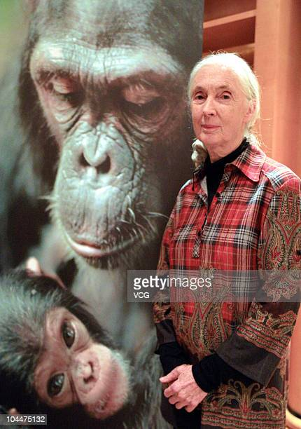 Jane Goodall, British primatologist, ethologist, anthropologist, and UN Messenger of Peace attends a semi centennial global celebration of her work...