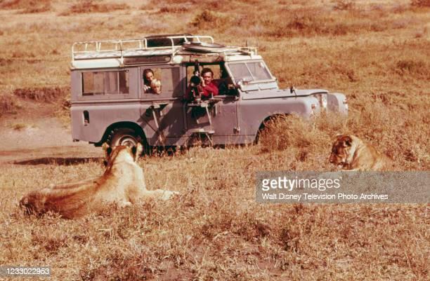 Jane Goodall, Hugo Eric Louis van Lawick, Hugo Van Lawick appearing on the ABC tv special 'Jane Goodall and the World of Animal Behavior: The Lions...