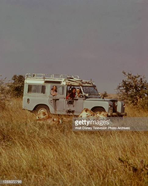 Jane Goodall, Hugo Van Lawick, Hugo Eric Louis van Lawick appearing on the ABC tv special 'Jane Goodall and the World of Animal Behavior: The Lions...