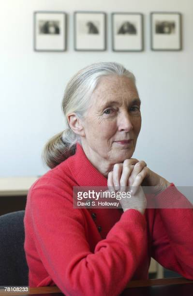 Jane Goodall poses for photos at the Jane Goodall Institute on February 18 2003 in Silver Spring Maryland The Jane Goodall Institute has since moved...