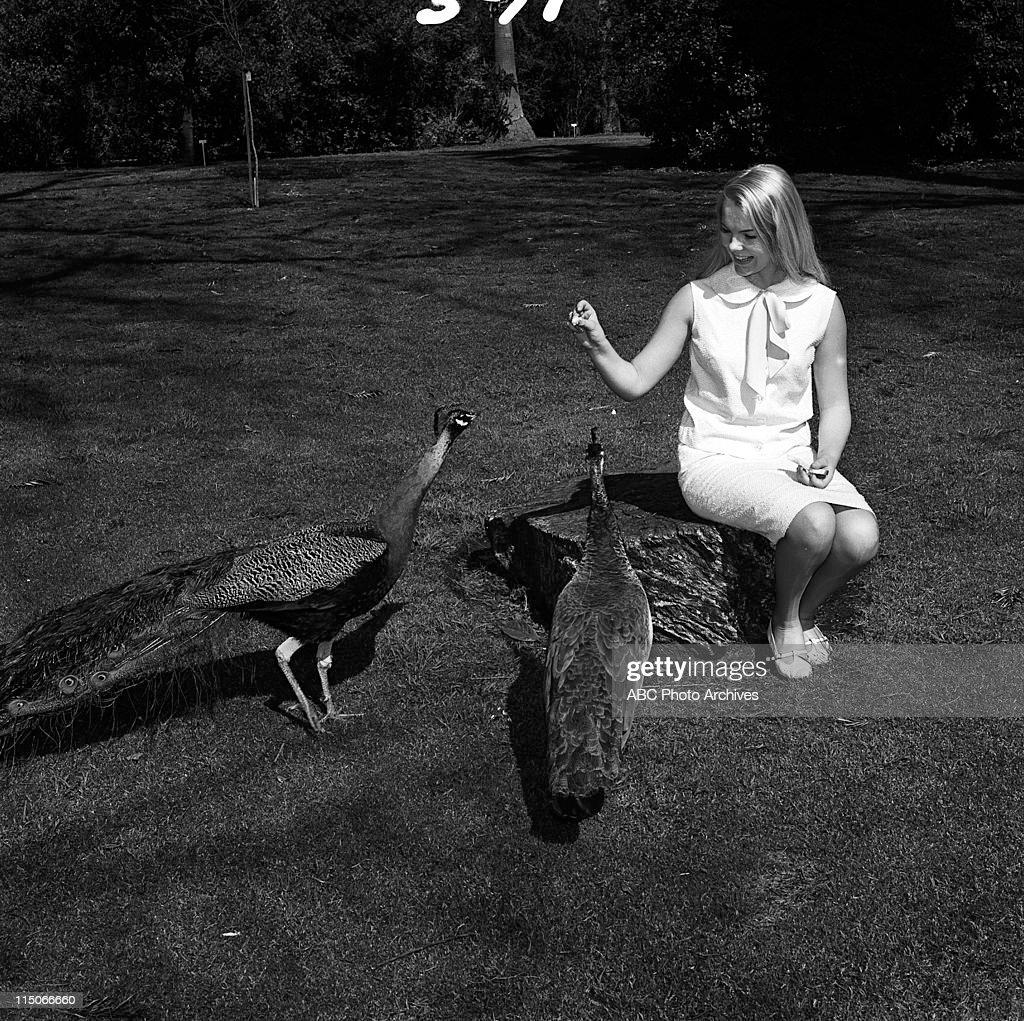 Anais Granofsky,Krystal Reyes (b. 1996) Adult fotos Anna Wood (actress),Steffani Brass