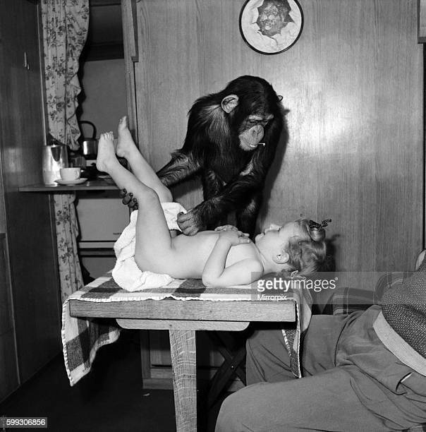 Janet the Chimp changes the nappy of little girl Alexis Kerr September 1952 C4705