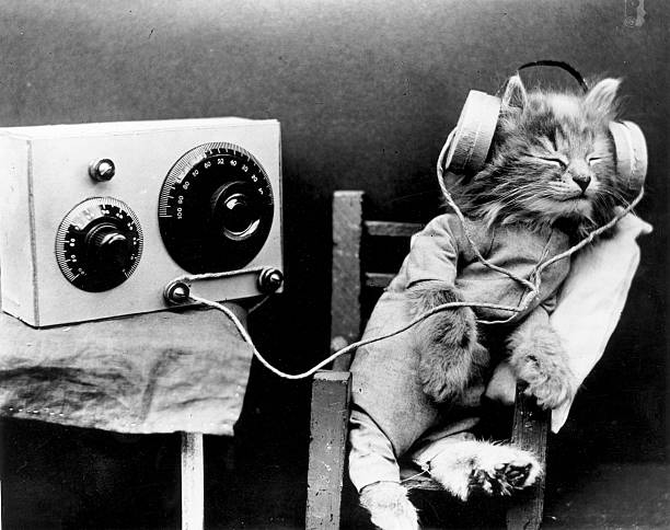 Radio Cat Wall Art