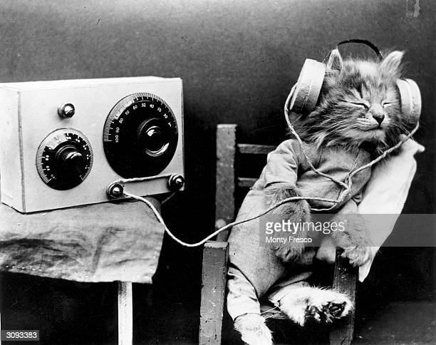 A cat wearing headphones to listen to a radio