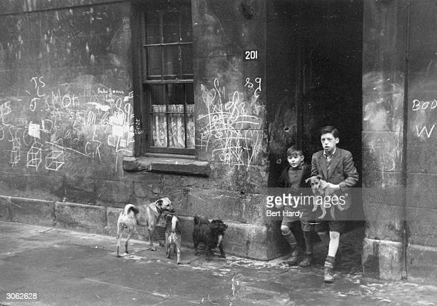 Two boys with their dogs in the Gorbals a slum area of Glasgow with unkempt streets and graffiti covered walls Original Publication Picture Post 4499...