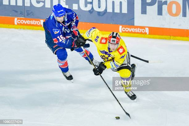 27 January 2019 BadenWuerttemberg Mannheim Ice hockey DEL Adler Mannheim Krefeld Penguins main round 43rd matchday in the SAP Arena Mannheim's Markus...